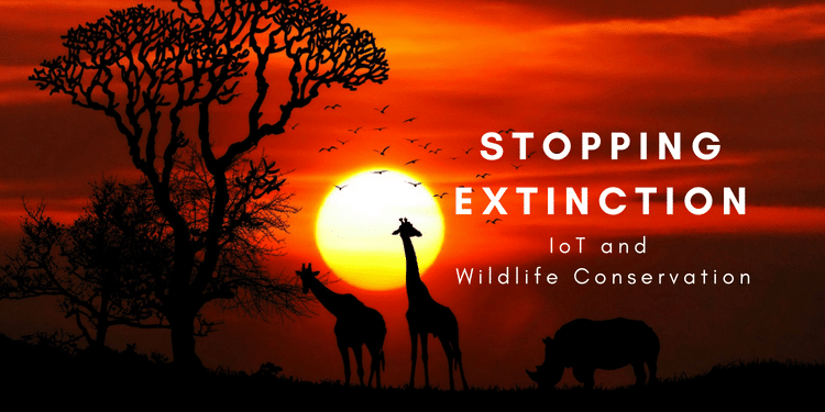 Stopping Extinction: IoT and Wildlife Conservation